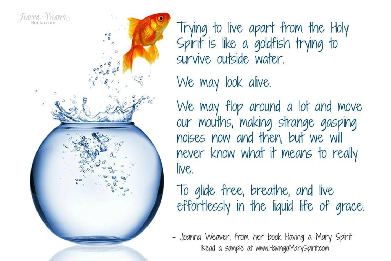 Having a Mary Spirit - Goldfish Poster JW - Having a Mary